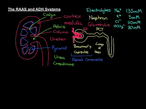 The RAAS and ADH Systems Part 1