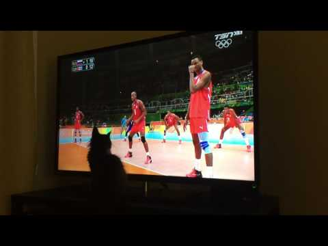 Black Maine Coon Cat Playing VolleyBall at Rio Olympic