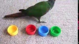 попугай различает цвет