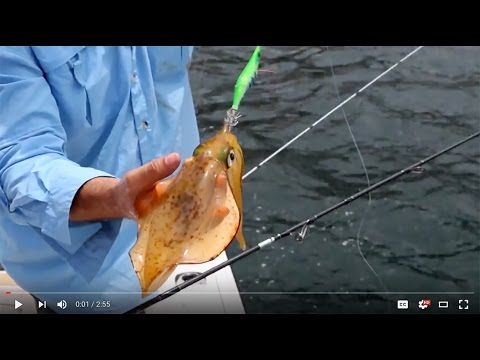 How To Catch Squid In Deeper Water And Offshore Areas