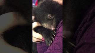 こんな音もだせるのか!?「クルクル…クククク….」人間に抱っこされて喉をならすクマの赤ちゃん