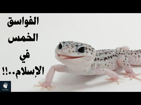 5 حيوانات امرنا الإسلام من التخلص منها مباشرة عند رؤيتها