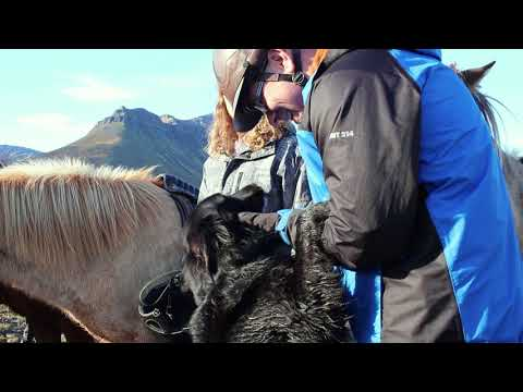 Skorrahestar horseback riding tours