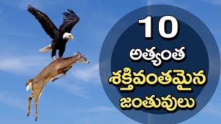 Top 10 Strongest Animals in the World | Unknown Facts Telugu
