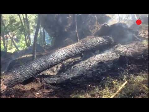 Alerta en Toén por un pequeño incendio forestal