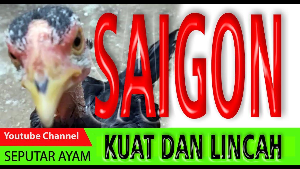 AYAM SAIGON | Seputar Ayam