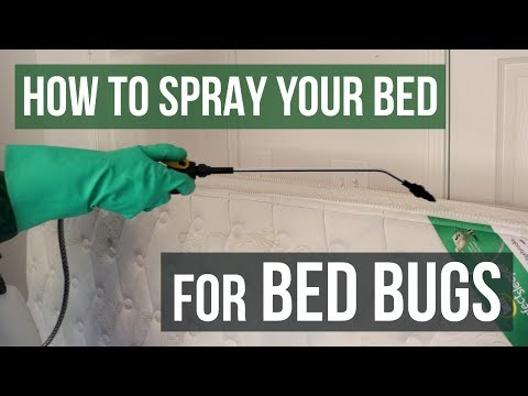 How to Spray Your Bed for Bed Bugs