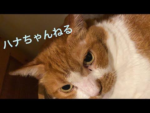松居直美   「ハナちゃんねる #1」