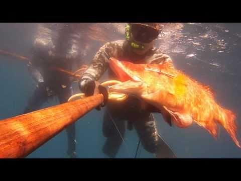 Chasse-sous-marine en martinique 3