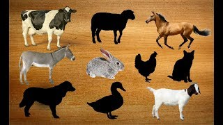 Learn Farm Animals Names/Wrong Wooden Slots With Cartoon Characters For Kids/Old Macdonald Rhymes