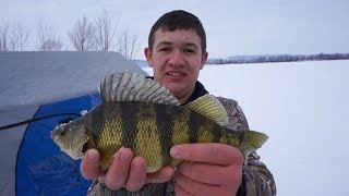 JUMBO Perch Fishing! WI State Ice Fishing Championships