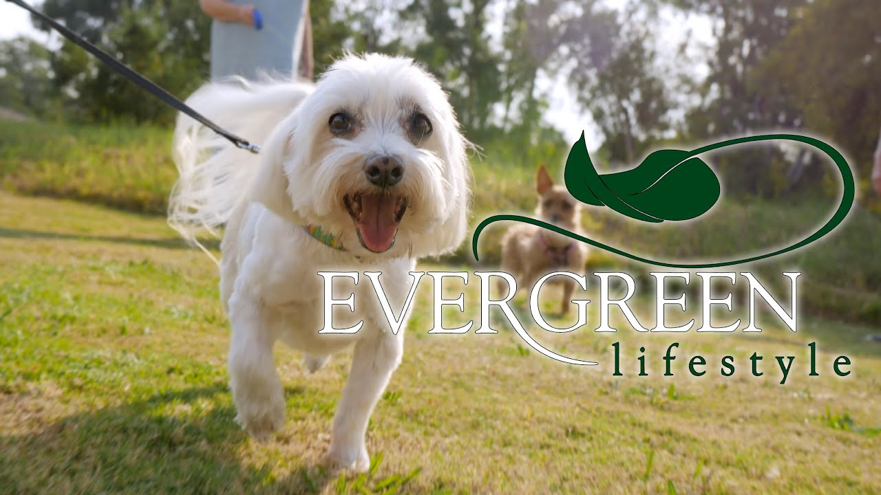 Evergreen Retirement Lifestyle Promotional Video