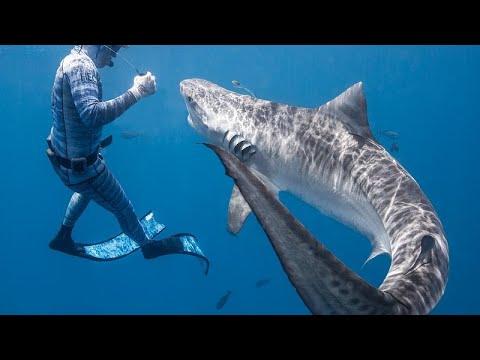حاول صيد الأسماك بالرمح فقتله القرش  - نشر قبل 4 ساعة