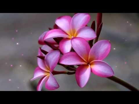Top 10 les plus belles fleurs du monde