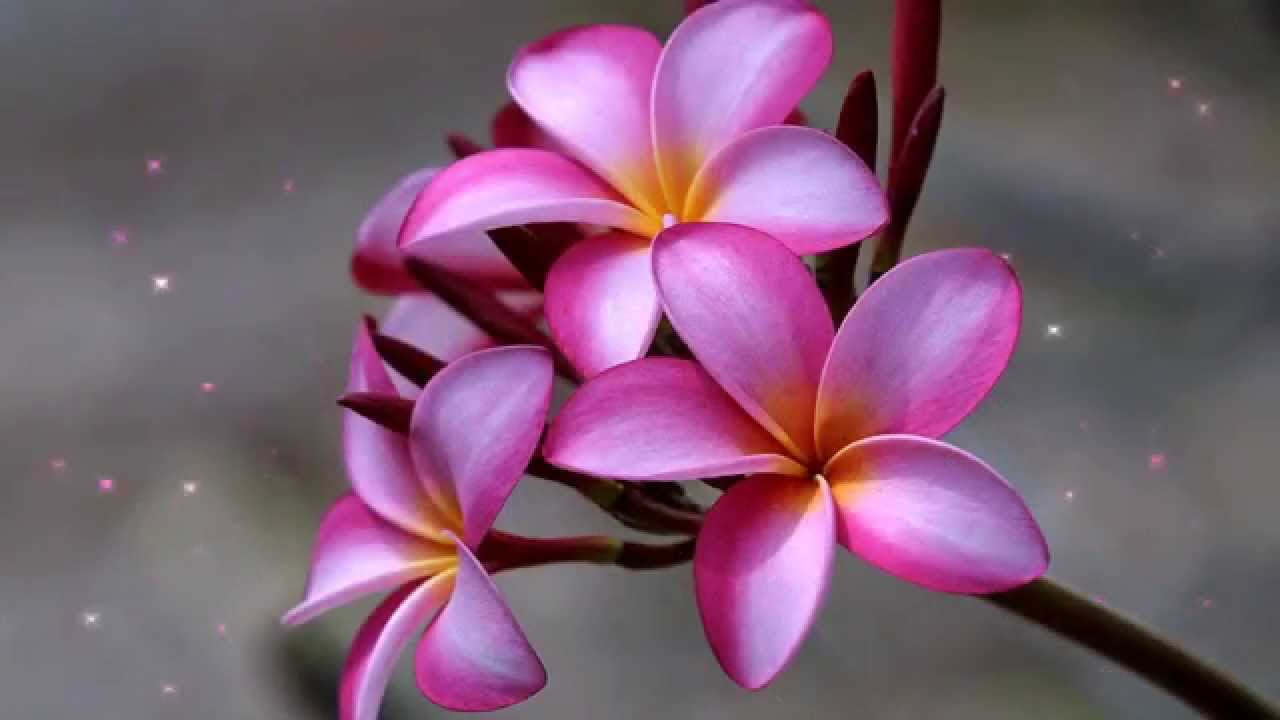 Hervorragend Top 10 les plus belles fleurs du monde - YouTube CA91