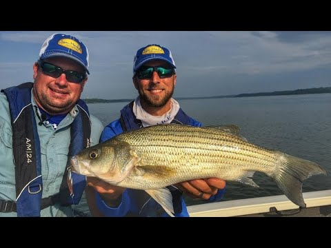 Hot Action Fishing Hybrid STRIPED BASS - Clinton Lake Kansas Jason Mitchell Outdoors