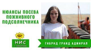 Нюансы посева пожнивного подсолнечника. Посев гибрида Гранд Адмирал от НИС г. Николаев