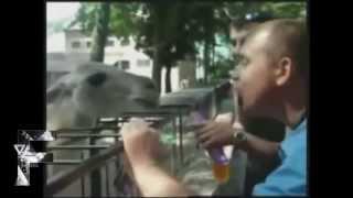 Осторожно! Животные атакуют!   YouTube