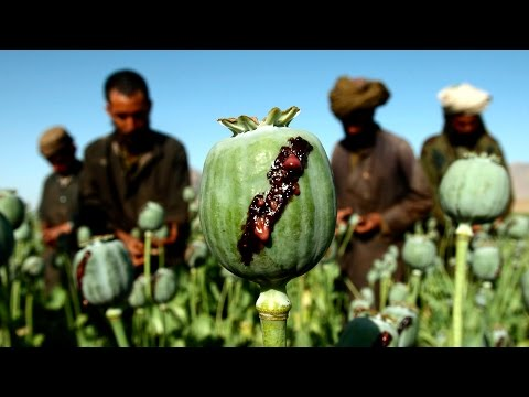 Opium Production in Afghanistan at an All Time High