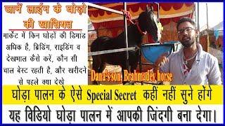 घोड़ा पालन करने की ऐसी अद्भुत जानकारी कहीं नहीं मिलेगी, Wonderful information about horse rearing