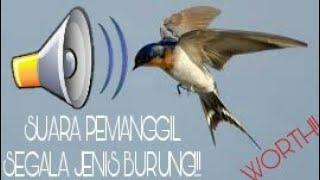 Video Suara Kompilasi Ampuh Untuk Pikat Segala Jenis Burung!! Langsung Lengket!!! download MP3, 3GP, MP4, WEBM, AVI, FLV September 2018