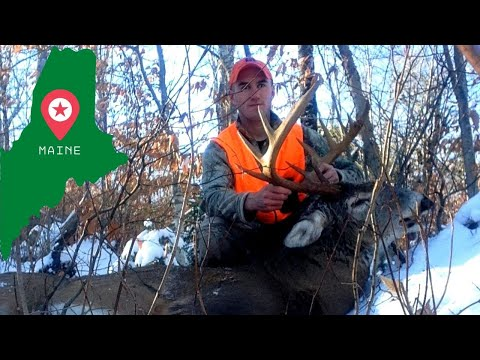 TRACKING BIG WOODS BUCKS IN THE SNOW Northern Maine Deer Hunting
