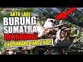 Satu Lagi Burung Dilindungi Dari Sumatra Ada Di Aviary Jarang Orang Tau  Mp3 - Mp4 Download