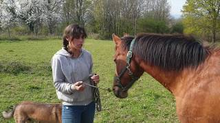 Attacher son cheval