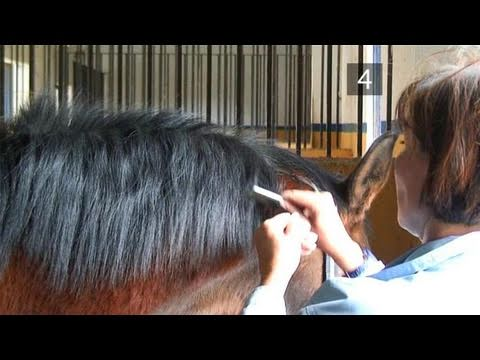 How To Remove A Mane