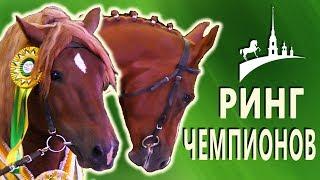 Лучшие лошади: выставка Иппосфера 2017, Ринг чемпионов /Конная выставка - разные породы лошадей