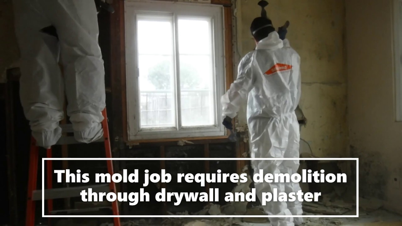 Claremont, CA Mold Removal and Mold Remediation | SERVPRO of