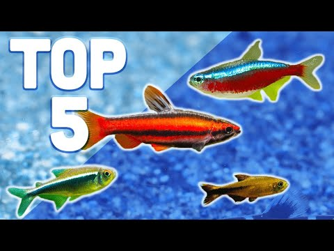 MY TOP 5 TETRAS FOR YOUR AQUARIUM