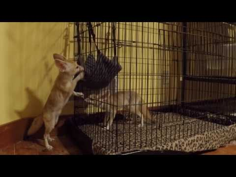 Foxy friends for Scout the Fennec Fox