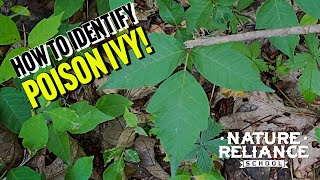 How to identify Poison Ivy.