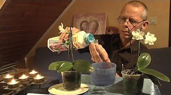 phalaenopsis orchideen youtube. Black Bedroom Furniture Sets. Home Design Ideas