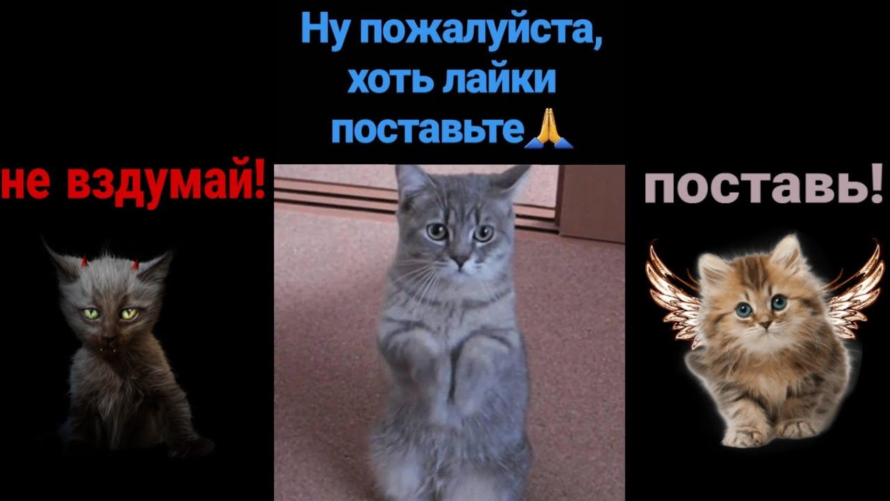 """Смешные стишки к видео (2 серия — """"Кошки"""") - YouTube"""