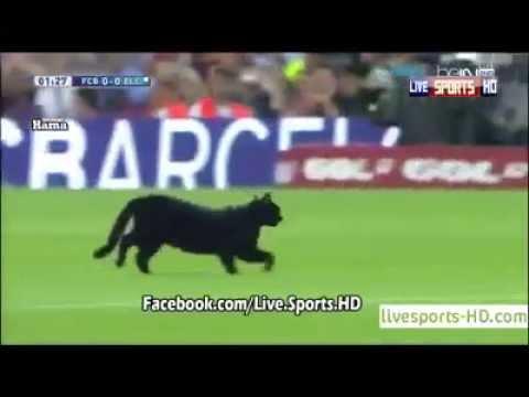 Un Chat Perturbe Le Match FC Barcelone - Elche 24/08/2014