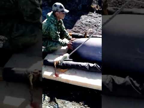 Экологи: «Первых косаток и белух из «китовой тюрьмы» в море не выпустили, а выбросили»