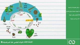 علوم الحياة و الأرض ، الجذع العلمي المشترك ، التوالد الجنسي لدى السرخسيات: دورة النمو