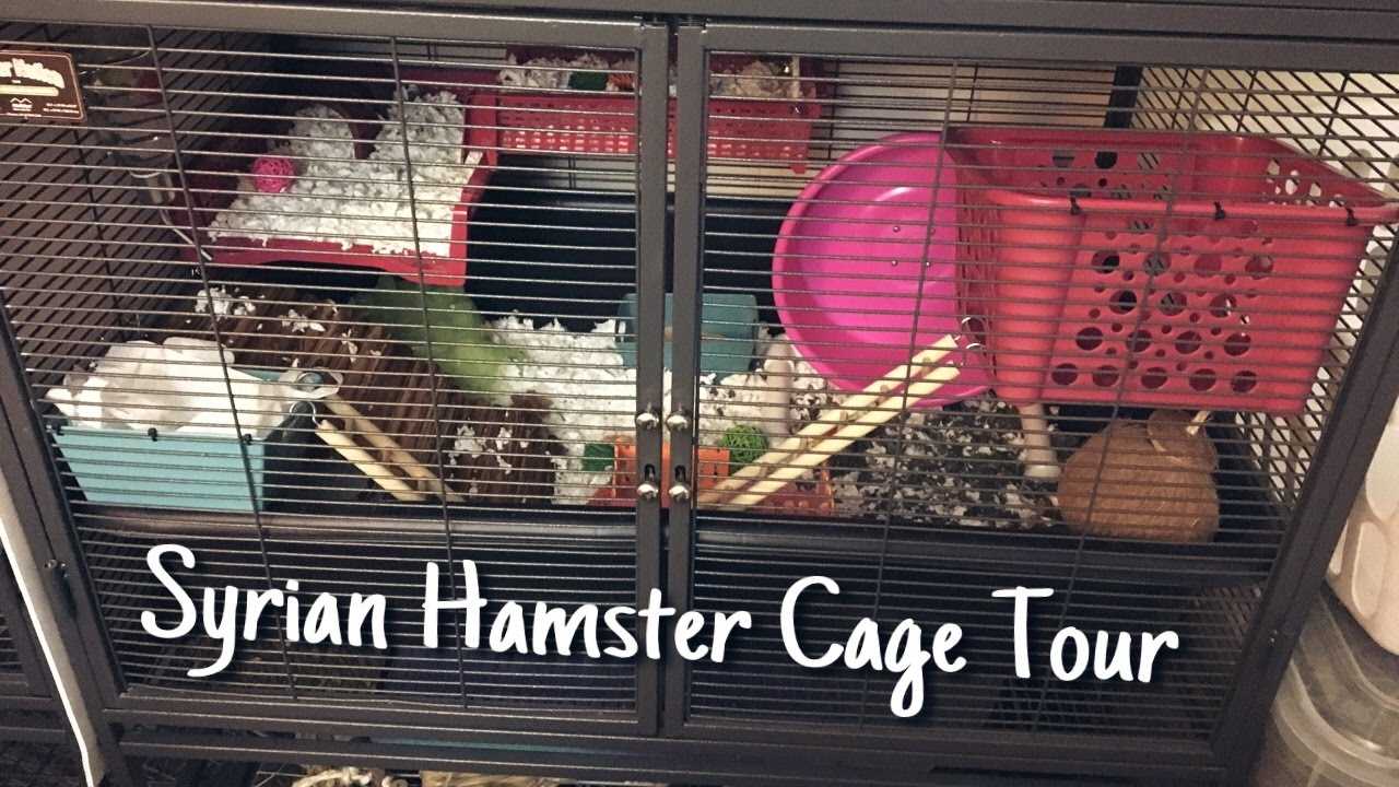 syrian hamster cage tour lumos midwest critter nation. Black Bedroom Furniture Sets. Home Design Ideas