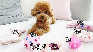 여자라고 핑크 좋아하는 귀여운 강아지 (실증도 개빠름😝)