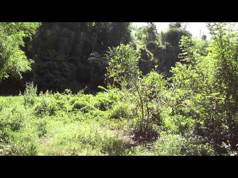 Nokia C6-01 Landscape Mode Video Test 720p HD