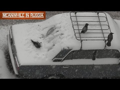 Crows Playing On A Snowy Car