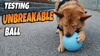 Can She Destroy Indestructible Dog Toy??