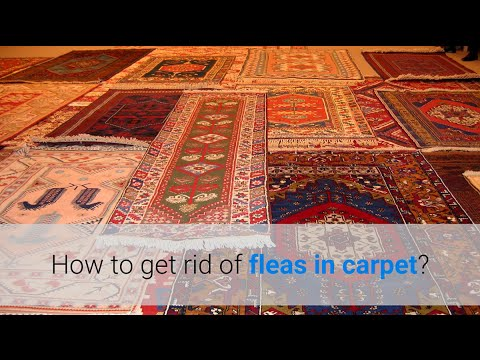 How To Get Rid Of Fleas In Carpet 4 Methods Youtube