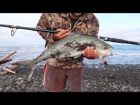 Kahawai Fishing- Kina Diving-  Smoking Fish