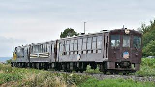 JR北海道DE15 1535+50系客車 富良野・美瑛ノロッコ2号 ラベンダー畑~西中間通過