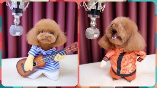 My beloved Poodle : SUPERB Singing DOG | So you think you can sing |