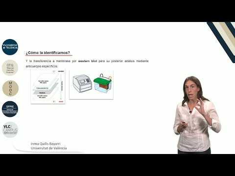 3.1. Manipulación de proteínas