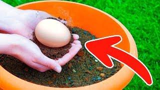 土に卵を埋めれば、数日間で驚きの結果が!お金をかけずに、あなたの庭...